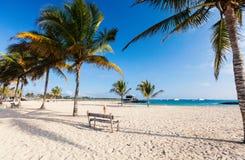 在加拉帕戈斯伊莎贝拉岛海岛,厄瓜多尔的海滩 库存照片
