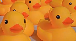 在加拿大人节日的橡胶Duckies  免版税图库摄影