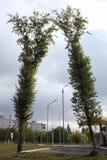 在加油站的两棵树在鄂木斯克 免版税库存图片