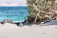 在加那利群岛上的有风海滩 库存图片