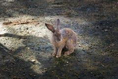 在动物农场的小兔 免版税库存图片