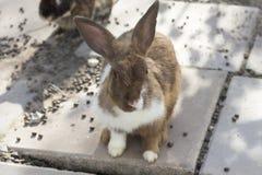 在动物农场的小兔 免版税库存照片