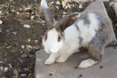 在动物农场的小兔 库存照片
