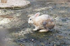 在动物农场的小兔 免版税图库摄影