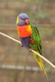 在动物园的一只colorfull鹦鹉 库存图片