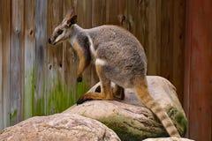 在动物园的一日 库存图片