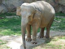 在动物园的一日 免版税图库摄影