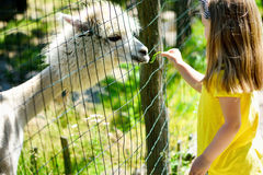 在动物园的可爱的小女孩哺养的羊魄在晴朗的夏日 免版税库存照片