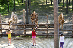 在动物园的孩子 库存照片