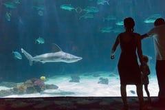在动物园的家庭观看的鲨鱼 免版税库存照片