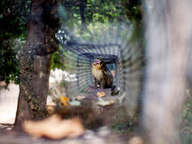 在动物园的小猴子 免版税图库摄影