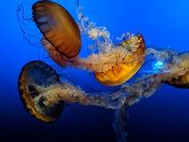 在动物园的水母 免版税库存照片