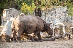 在动物园的犀牛 免版税库存照片