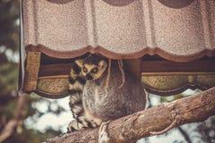 在动物园的猫狐猴 免版税库存照片