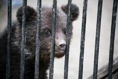 在动物园的笼子的小熊 免版税库存图片