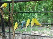 在动物园的长尾小鹦鹉 库存图片