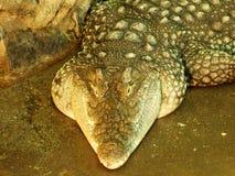 在动物园的鳄鱼在萨格勒布 库存图片