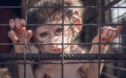在动物园的滑稽的猴子 免版税库存照片