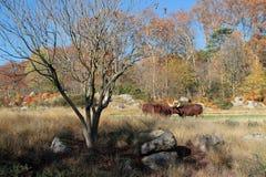 在动物园的Autum颜色 免版税库存图片