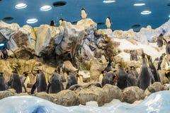 在动物园的Penquins在Loro公园,普埃尔托德拉克鲁斯,特内里费岛, 免版税库存照片