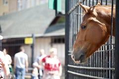在动物园笼子的马 免版税图库摄影