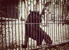 在动物园笼子的黑捷豹汽车  库存照片