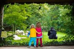 在动物园里哄骗观看的动物 库存图片