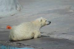 在动物园里 免版税库存照片