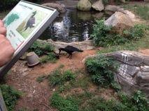 在动物园 免版税库存图片