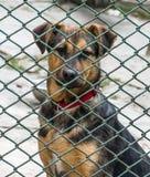在动物庇护所的一只无家可归的小狗 帮助和慈悲 免版税库存照片