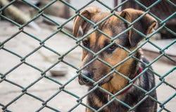 在动物庇护所的一只无家可归的小狗 帮助和慈悲 库存照片