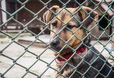 在动物庇护所的一只无家可归的小狗 帮助和慈悲 免版税库存图片