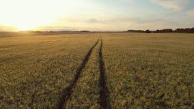 在努力去做入在浩大的黄色麦田的距离的路的天线在金黄日落 股票录像