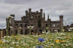 在劳瑟城堡的野花 免版税库存图片