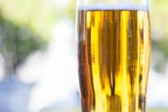 在包含低度黄啤酒,皮尔逊/贮藏啤酒样式的啤酒杯的特写镜头,服务在一块标准比标准的要小一些的玻璃 库存图片