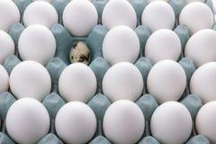 在包装和鹌鹑蛋的白鸡蛋 免版税库存图片