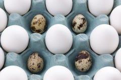 在包装和鹌鹑蛋的白鸡蛋 库存图片