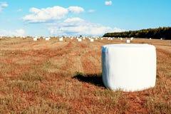 在包装的领域的被割的干草 库存照片