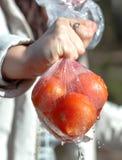 在包裹的新鲜的红色蕃茄 免版税库存照片