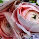 在包裹的银莲花属 免版税库存图片