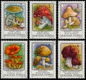 在匈牙利打印的邮票显示毒蘑菇 免版税库存图片