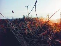 在匈牙利边界上的蜘蛛网 免版税库存图片