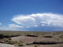 在化石森林的暴风云 免版税库存图片