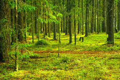 在北夏天木头的道路 免版税库存照片