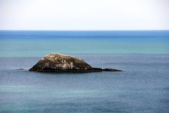 在北岛新西兰的西海岸的Muriwai海滩 库存照片