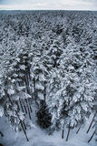 在北欧人欧洲的一个美好的冬天风景 图库摄影