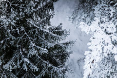 在北欧人欧洲的一个美好的冬天风景 库存图片