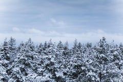 在北欧人欧洲的一个美好的冬天风景 免版税库存照片
