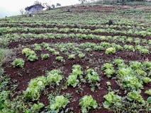 在北泰国的小山的农田植被 免版税库存图片