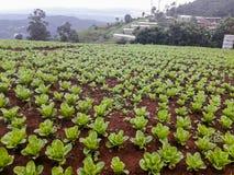 在北泰国的小山的农田植被 库存图片